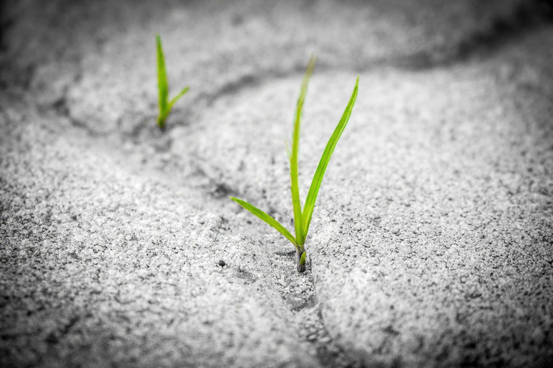 Isme sustainability